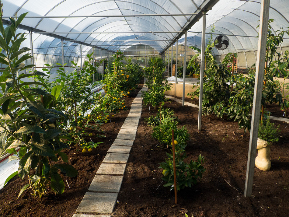 'Jane Squier's Super-Efficient Greenhouse Saves Time and Energy'