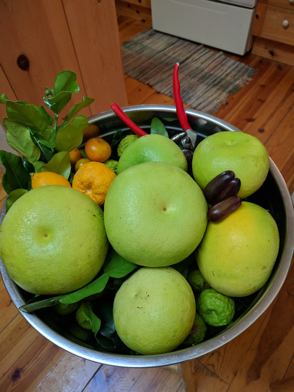 January freshly picked fruit...