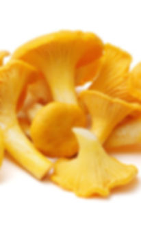 7127chanterelle_mushroom.jpg