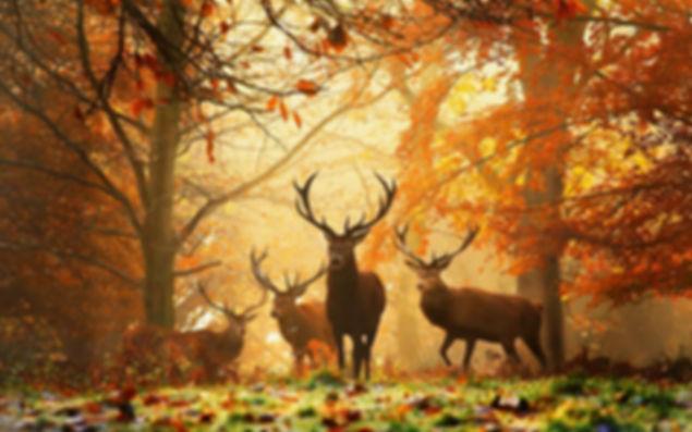 fond-ecran-nature-paysages-automne-2013-