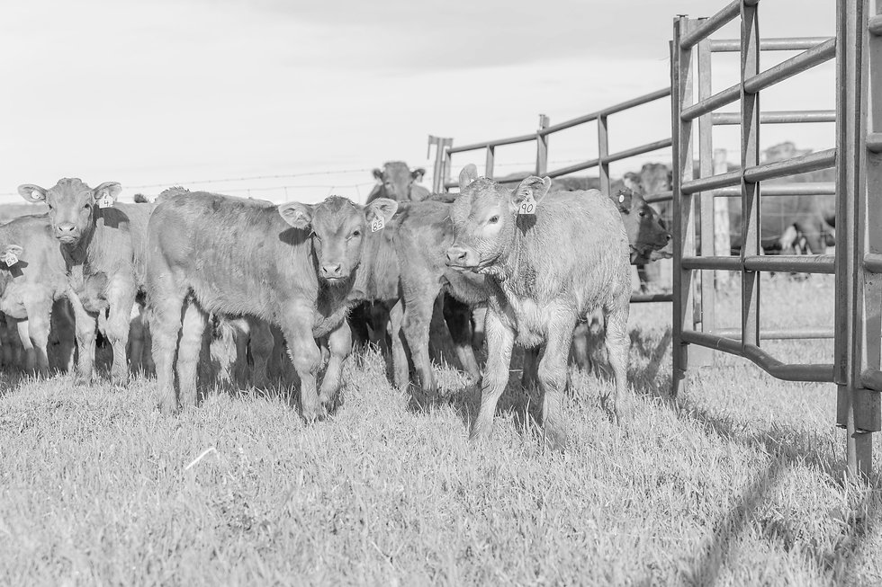CL%20Ranches%20-%202019%20Branding-0325_