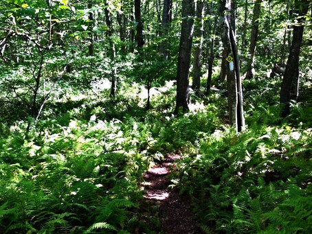 A 14 Mile Hike In Southern CT - Richard H. Goodwin Trail