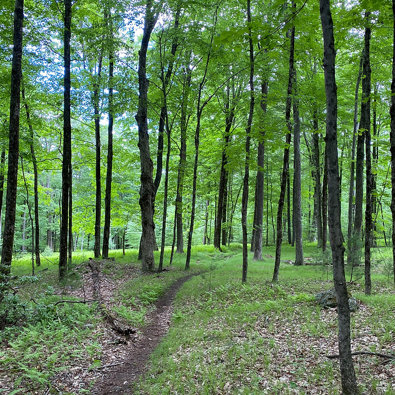 National Trails Day Backpacking Adventure: Nipmuck Trail
