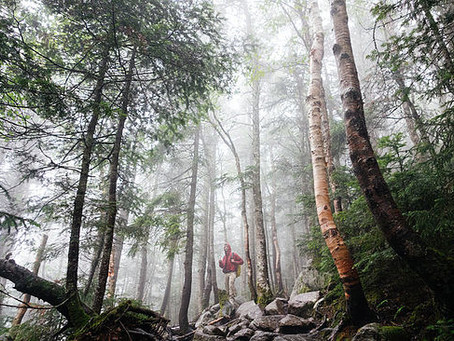 Short Is The New Long: 10 Must-Hike Long Distance Trails In New England & New York