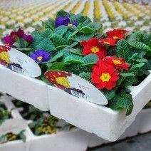 Horticulture.jpg