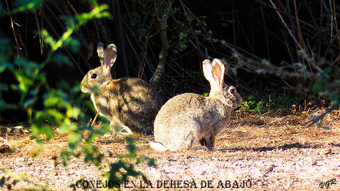 Conejos-1-WEB.jpg