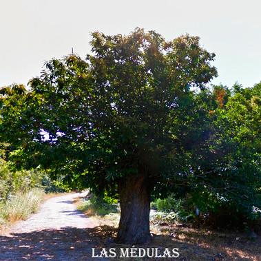 Las_Medulas-Castaños-WEB.jpg