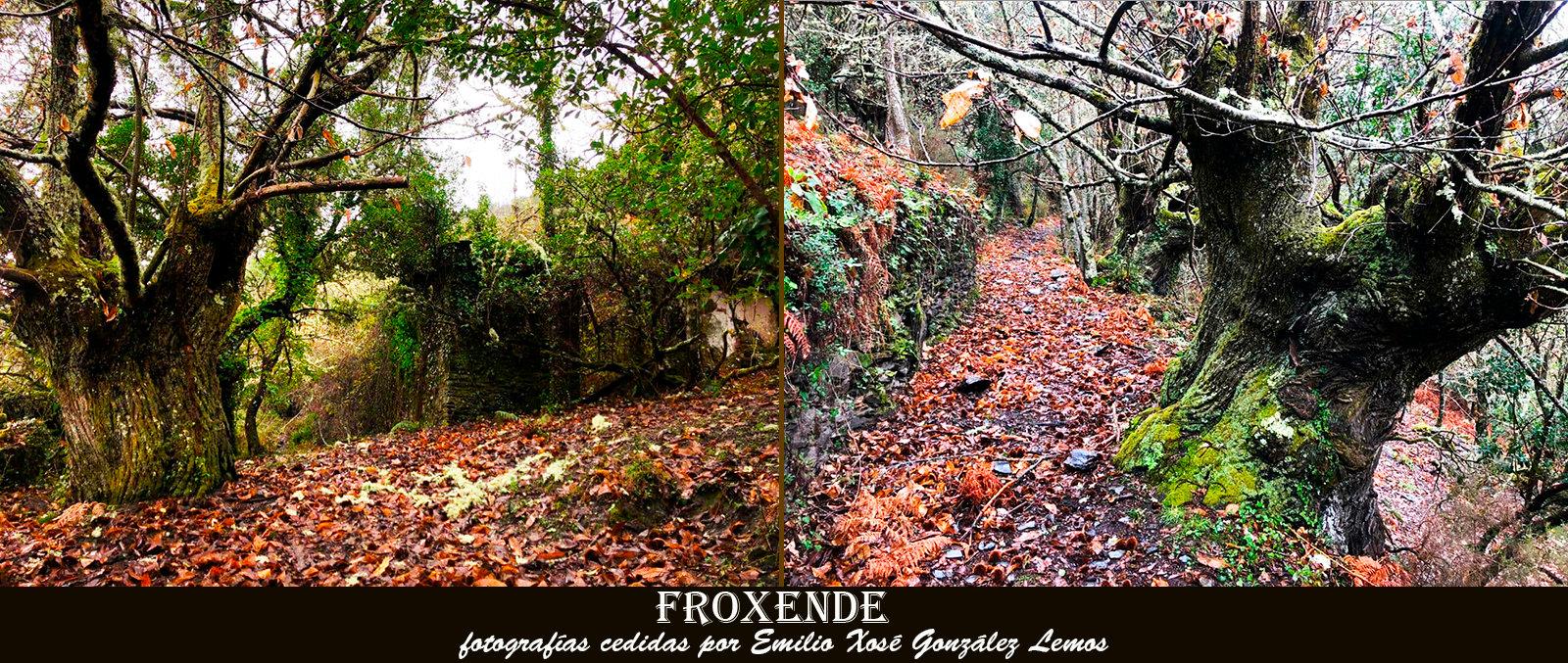 Froxende1-WEB.jpg