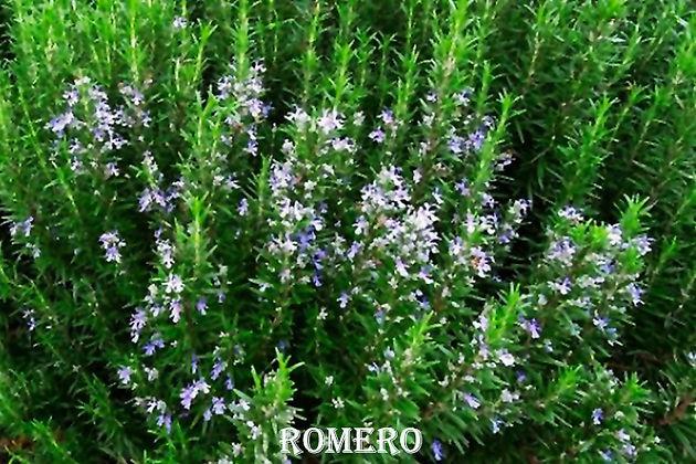 Romero-WEB.jpg