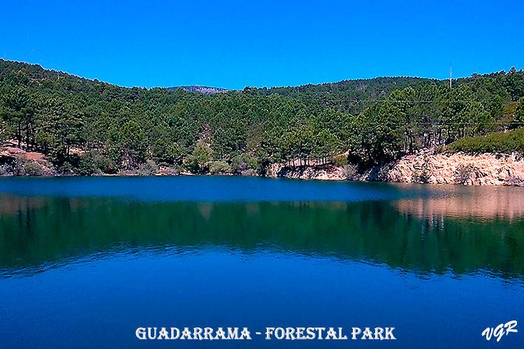 Forestal Park-2-WEB.jpg