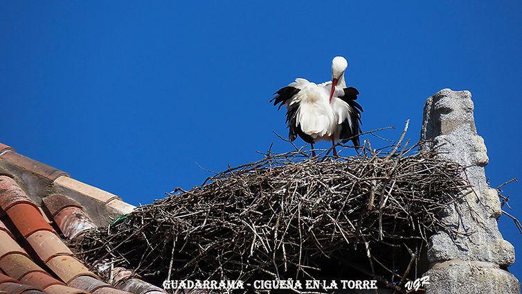 Cigueña-2-WEB.jpg