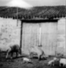 Antiguas-Guadarrama-cerdos-WEB.jpg
