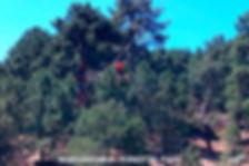 Forestal Park-5-WEB.jpg