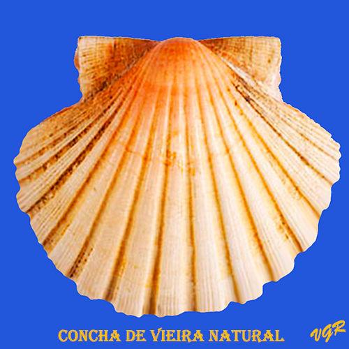 Concha de vieira natural-2-WEB.jpg