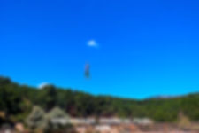 Forestal Park-4-WEB.jpg