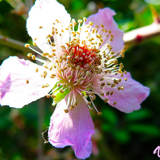 flor zarza-2-WEB.jpg