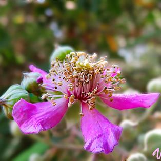 flor zarza-3-WEB.jpg