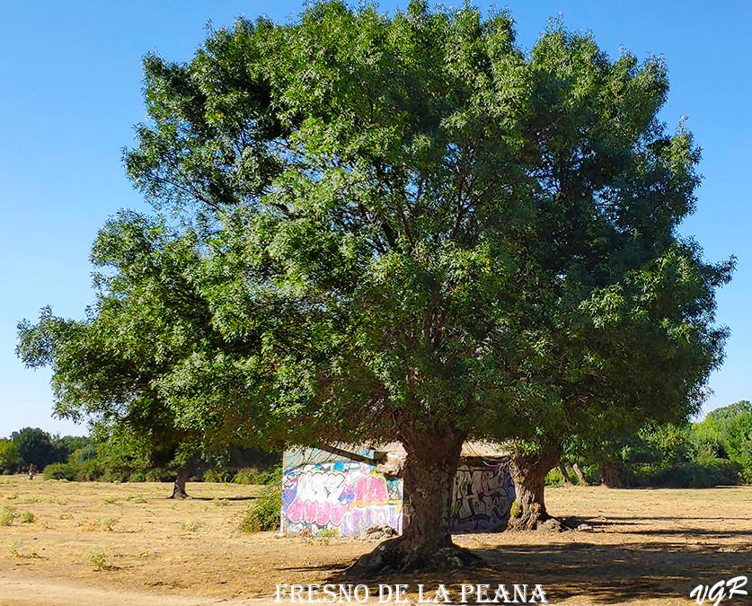 Fresno de la Peana-5-WEB.jpg