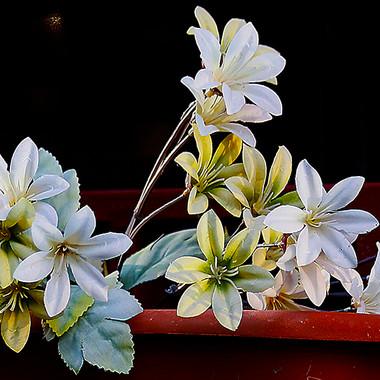 flores-100-WEB.jpg