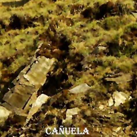 Cañuela-Festuca_Indigesta-WEB.jpg