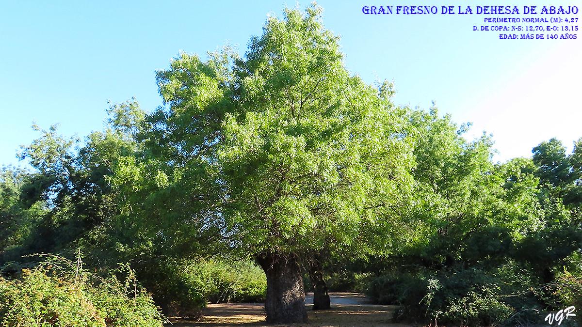 Gran Fresno-3-WEB.jpg