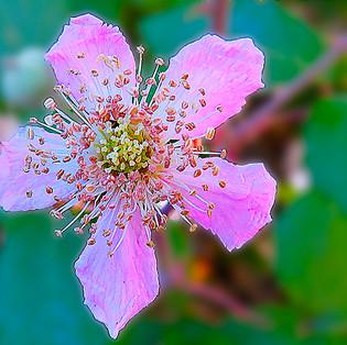 flor zarza-4-WEB.jpg