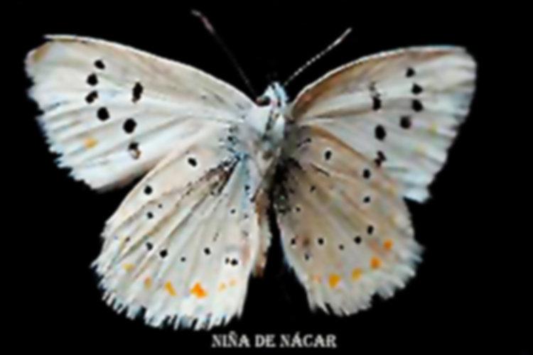 Niña_de_naca-WEBr.jpg