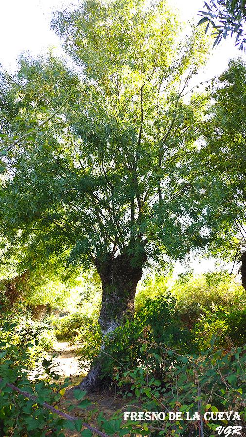 Fresno de la Cueva-4-WEB.jpg