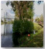 Rio cabe-1.jpg