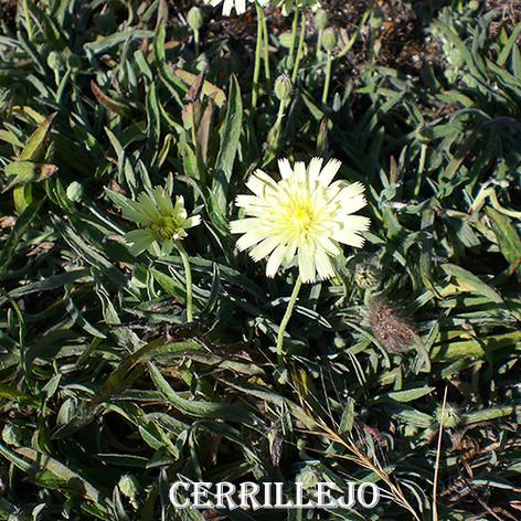 Cerrillejo-WEB.jpg