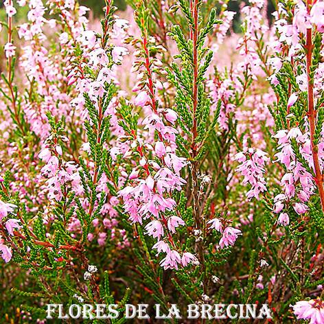 Brecina-2-WEB.jpg