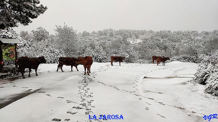 Lago Nevado-3-WEB.jpg