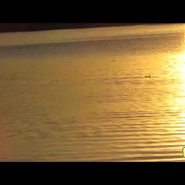 Patos-nadando.mp4