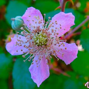 flor zarza-1-WEB.jpg