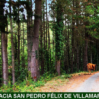 13-HACIA VILLAMARÍN-WEB.jpg