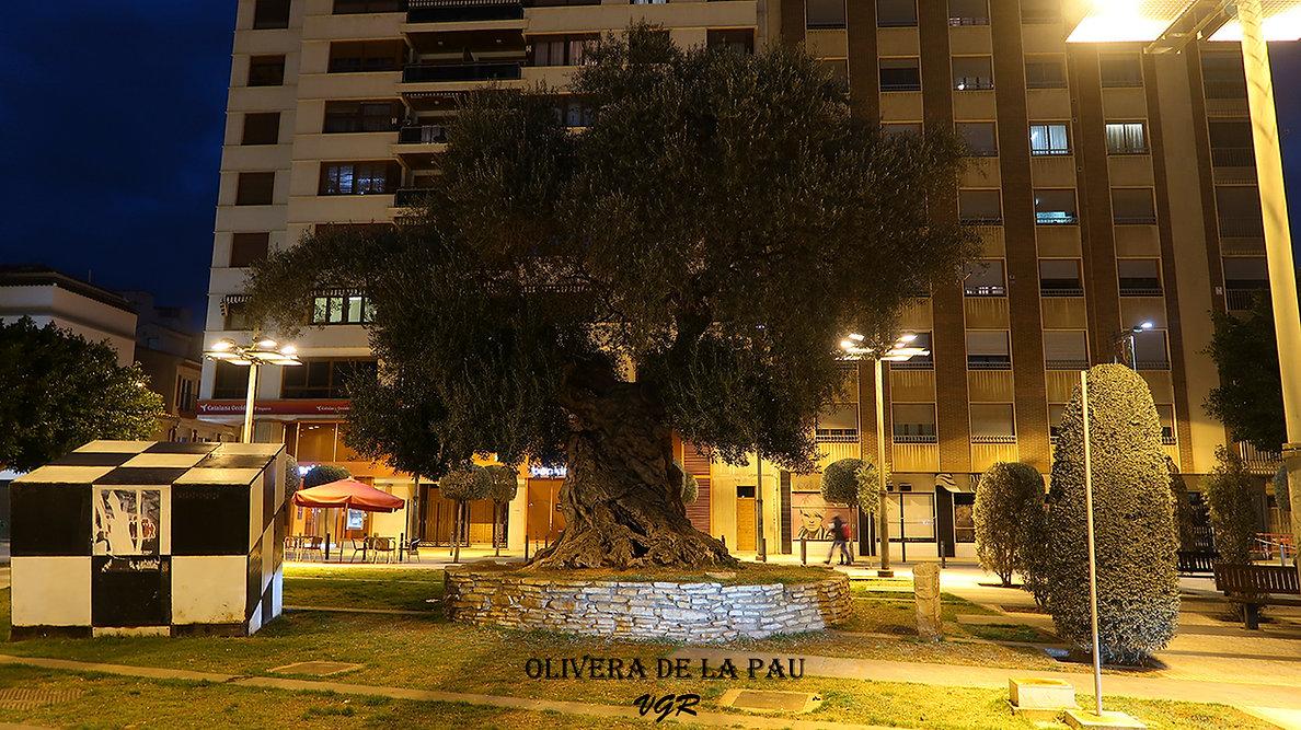 Olivera-1-WEB.jpg