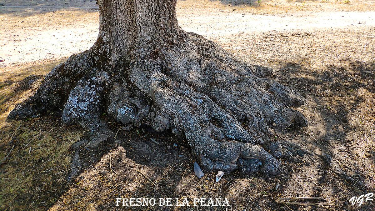 Fresno de la Peana-4-WEB.jpg