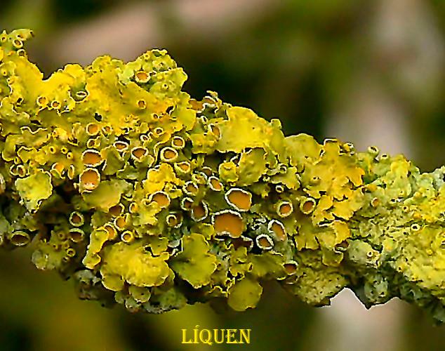 liquen-2-WEB.jpg