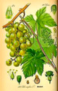Viticultura heroica-3-WEB.jpg