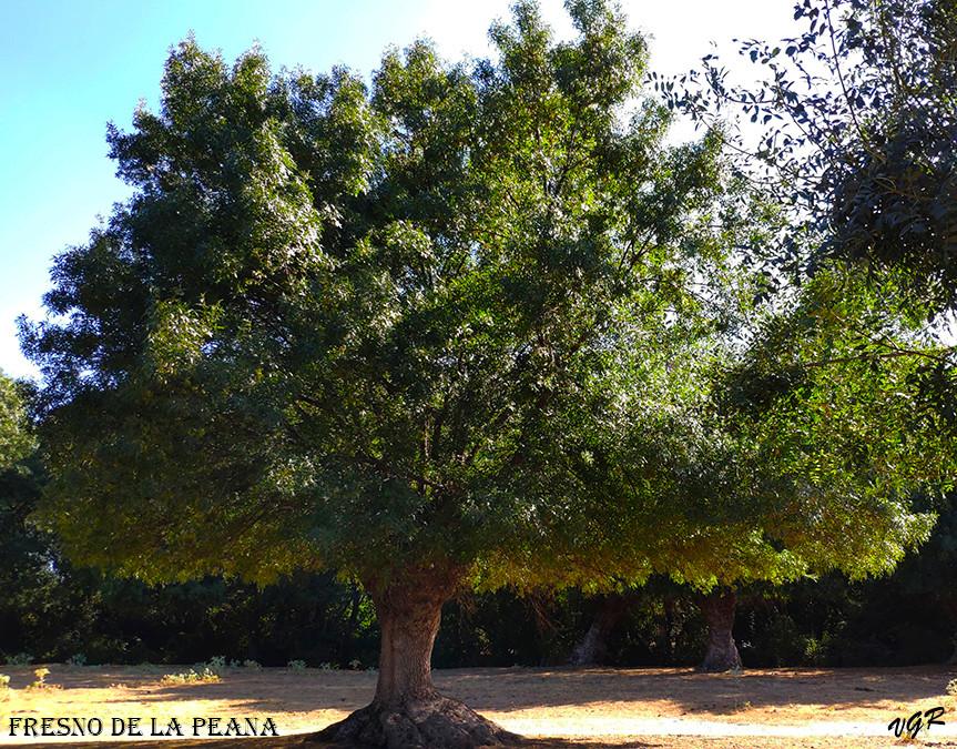 Fresno de la Peana-3-WEB.jpg