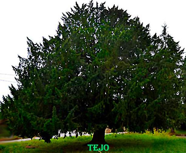 Tejo-WEB.jpg
