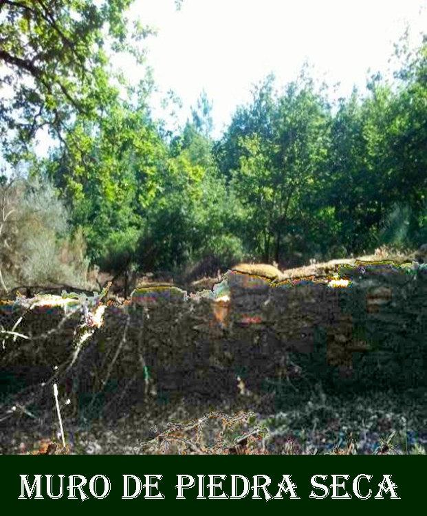 Muro piedra seca-WEB.jpg