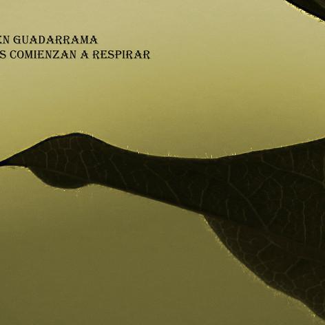 Amanecer-Guadarrama-plantas1-WEB.jpg