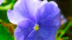 FLORES-2-WEB.jpg