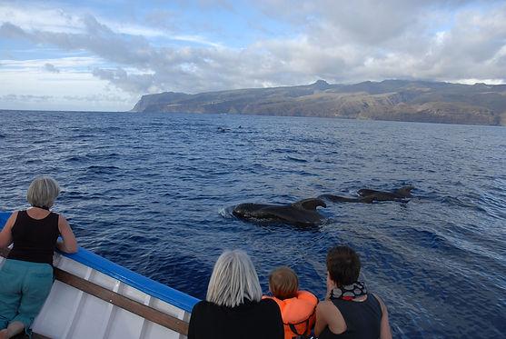 Gäste beobachten Pilotwale