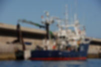 ueberfischung-der-meere-la-gomera.JPG