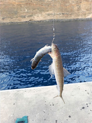 Eidechsenfisch (Kanaren)
