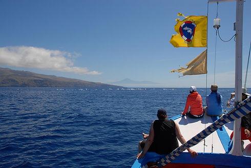 Gäste beobachten Wale und Delfine vom Boot aus