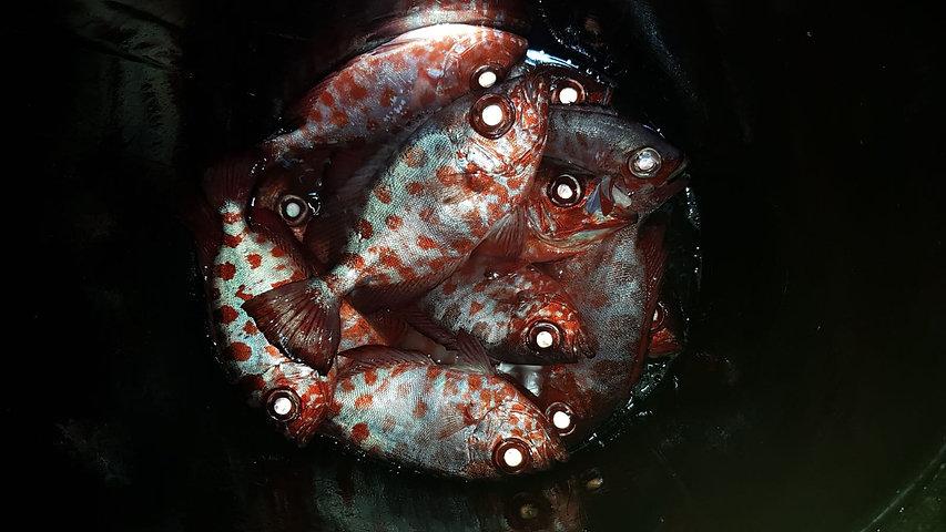 Kleine Fische geangelt in der Nacht