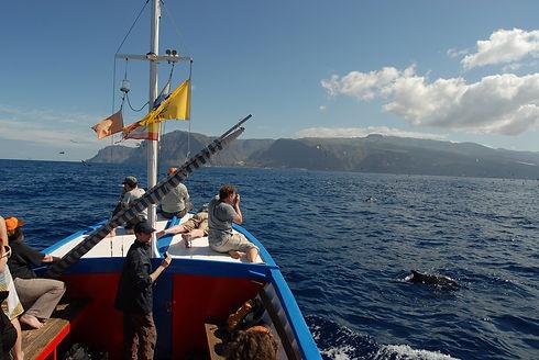 Whale Watching an der Küste von Valle Gran Rey